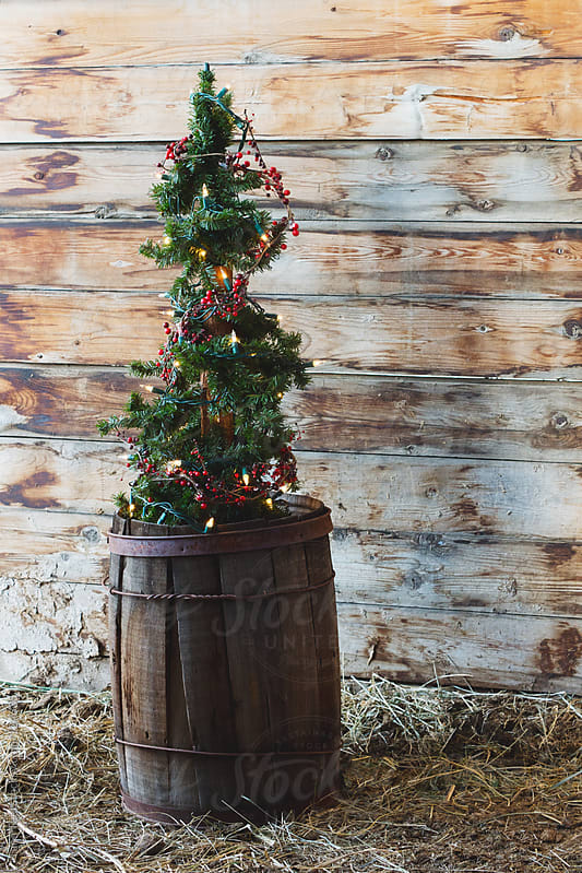A rustic alpine tree decorated with lights sits inside antique barrel for the holidays by Tana Teel for Stocksy United