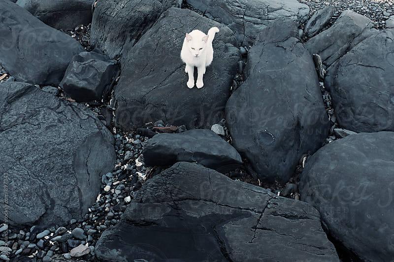 Island Cat by StockvanSaar for Stocksy United