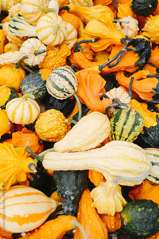 decorative squash at farmers market by Cameron Zegers for Stocksy United