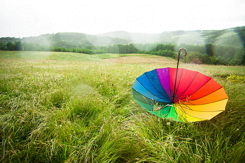 Colourful umbrella in a spring field on a rainy day. by Mosuno for Stocksy United