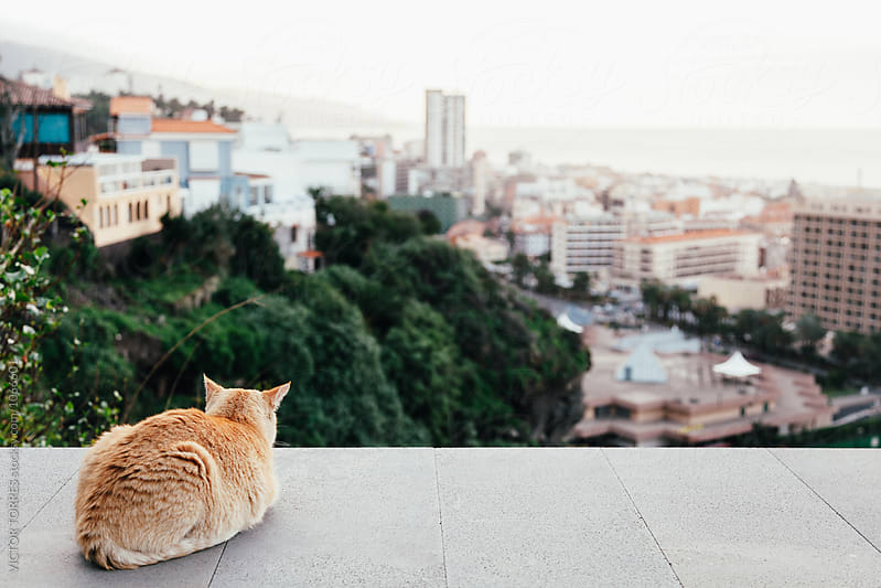 Cat Looking at the City by VICTOR TORRES for Stocksy United