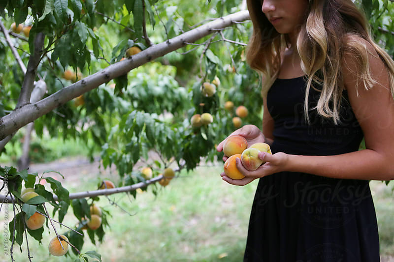 A Teenage Girl Holding Fresh Picked Peaches by ALICIA BOCK for Stocksy United
