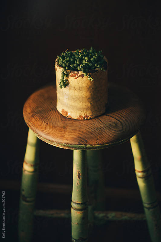 succulent in a pot on an antique stool by Kelly Knox for Stocksy United