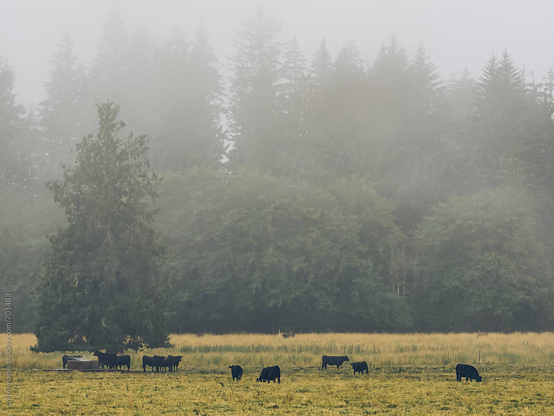 farm fields and forest of The Olympic National Park by unite images for Stocksy United