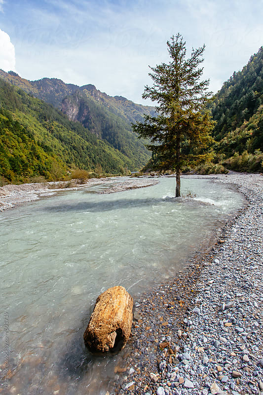 lonely tree in the river by zheng long for Stocksy United