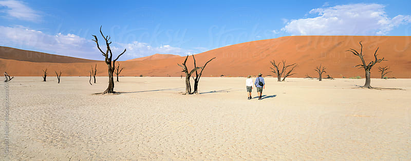 Tourists walking past dead trees towards orange sand dunes, Dead Vlei, Namib Desert, Namibia, Africa by Gavin Hellier for Stocksy United