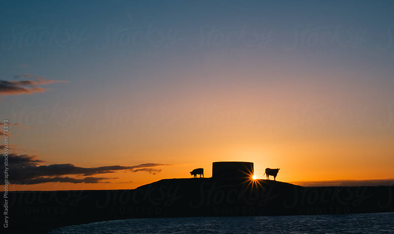 Cows on a hill near a water tank by Gary Radler Photography for Stocksy United