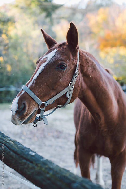 Horse by Mauro Grigollo for Stocksy United