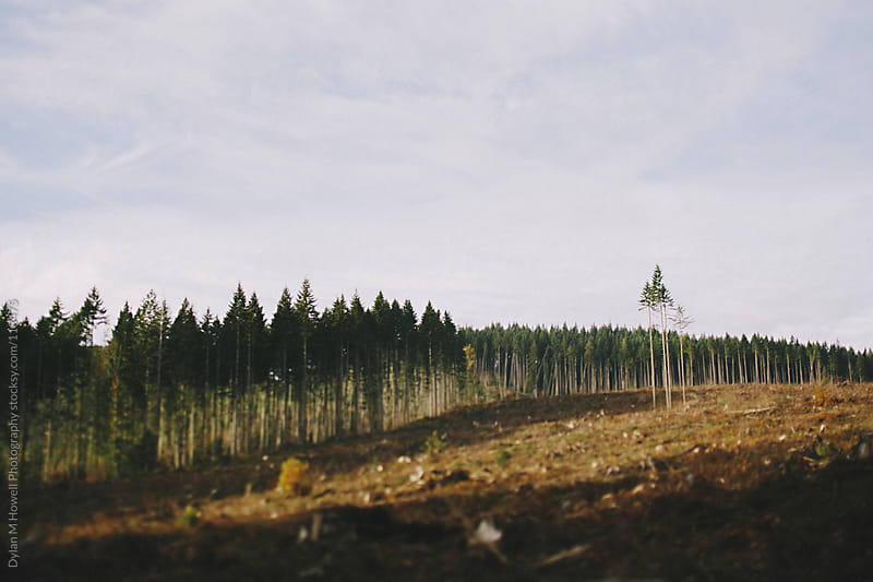 Washington Forest by Dylan M Howell Photography for Stocksy United