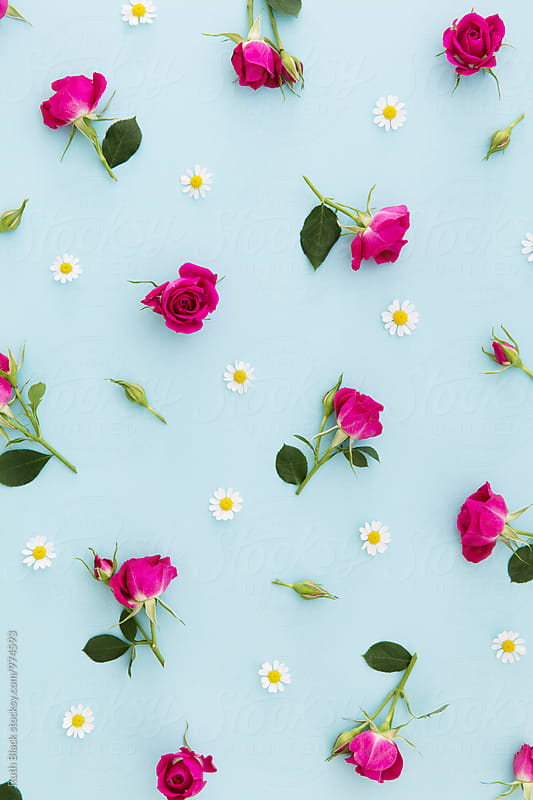 Summer flower background by Ruth Black for Stocksy United