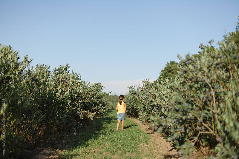 A young girl walking down a row of blueberry bushes on a farm by Amanda Worrall for Stocksy United