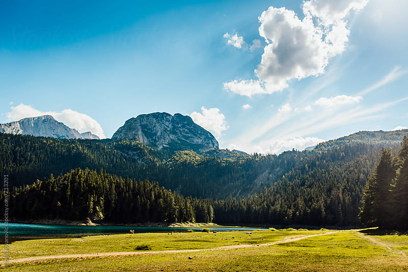 Scenic view on Black lake surrounded by forest  by Boris Jovanovic for Stocksy United