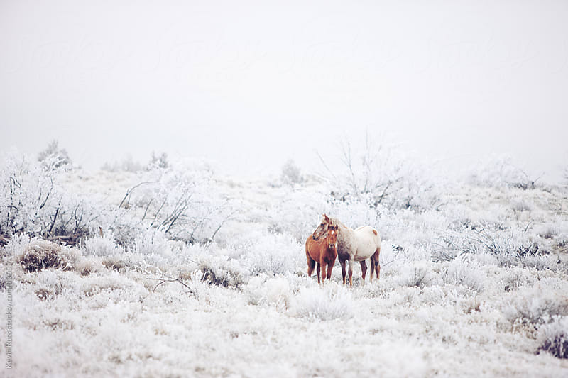Two Winter Horses by Kevin Russ for Stocksy United