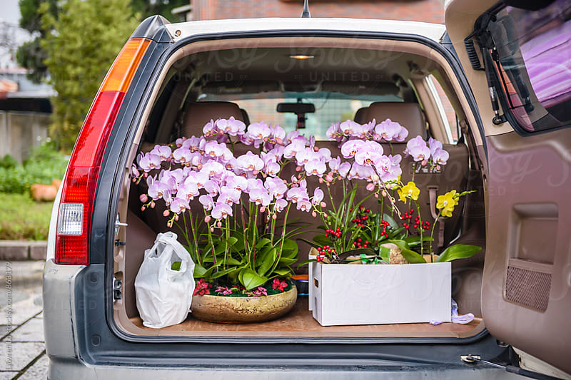 Moth orchid on trunk ready for transportation by Lawren Lu for Stocksy United