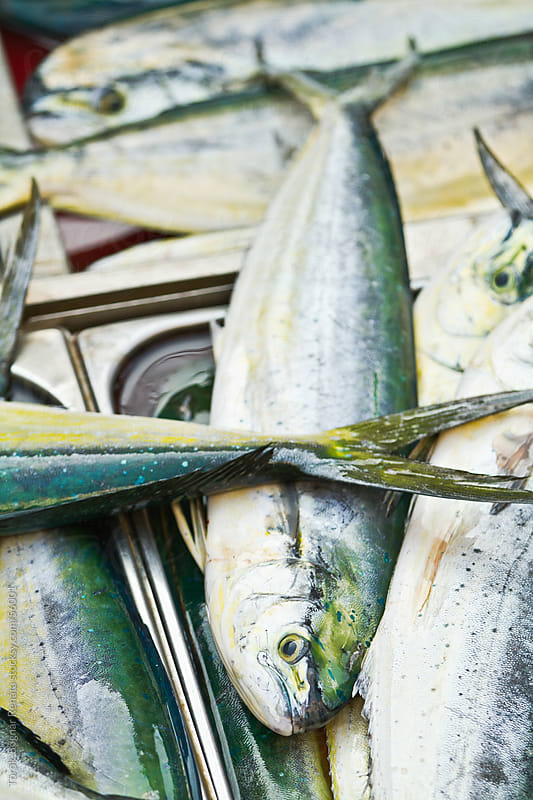 Fresh fish by Török-Bognár Renáta for Stocksy United