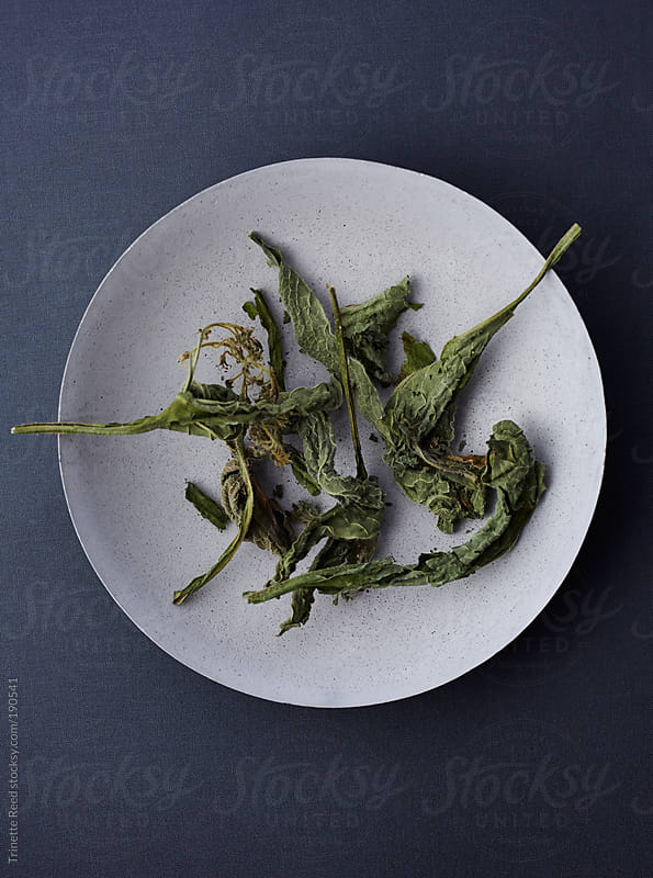 Dried comfrey herbs in concrete bowl  by Trinette Reed for Stocksy United