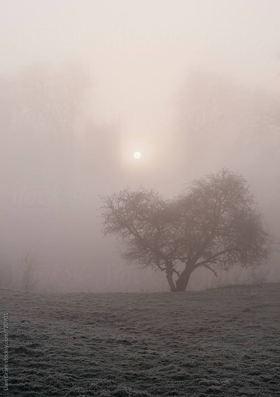 Sunrise through fog behind Hilborough Church. Norfolk, UK. by Liam Grant for Stocksy United