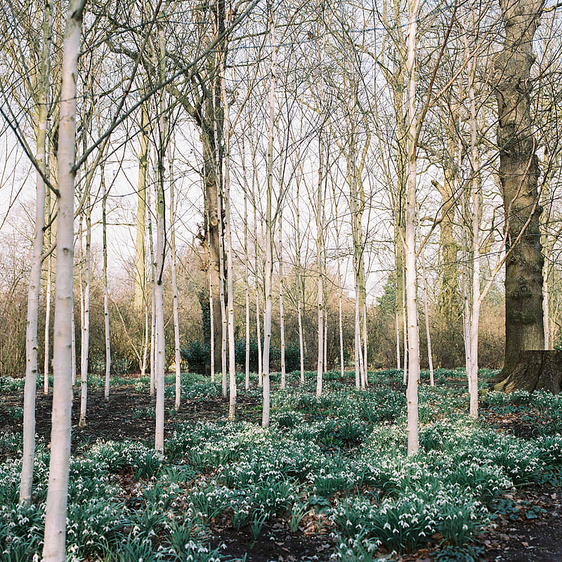 Silver Trees in the Park by Andrew Spencer for Stocksy United