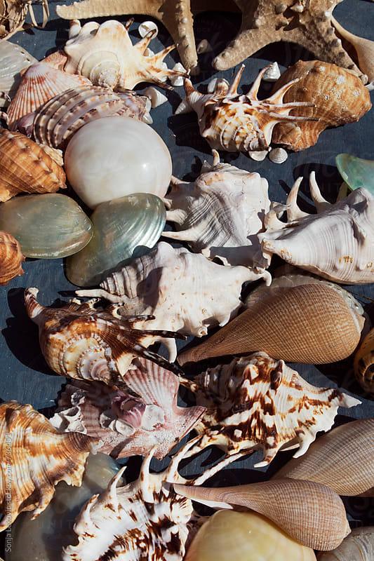 various seashells background by Sonja Lekovic for Stocksy United