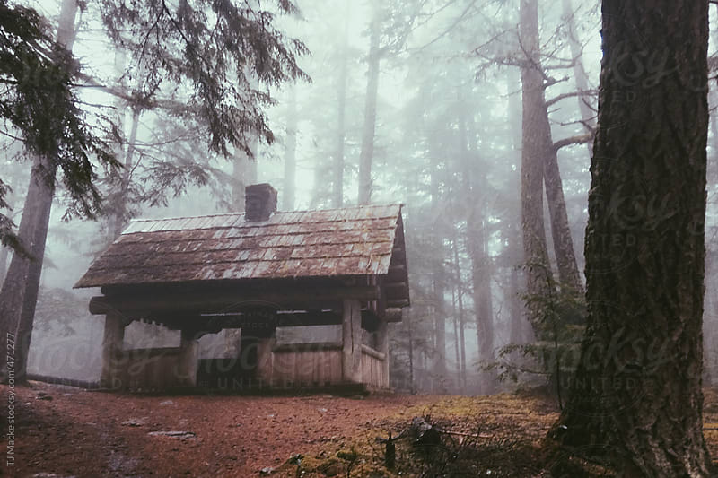 A cabin in a foggy pine forest by TJ Macke for Stocksy United