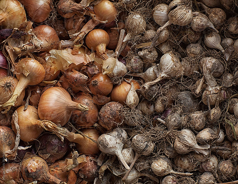 Onion garlic background. by Marija Savic for Stocksy United
