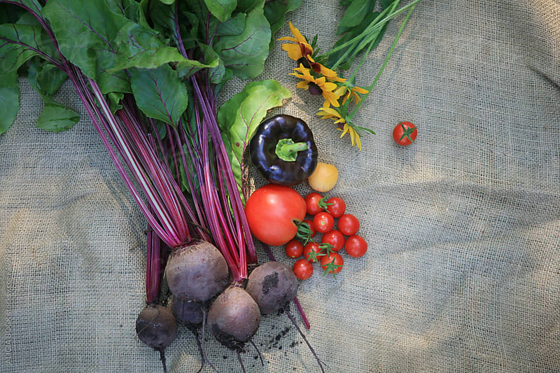 Fresh Picked Vegetables In The Sun by ALICIA BOCK for Stocksy United