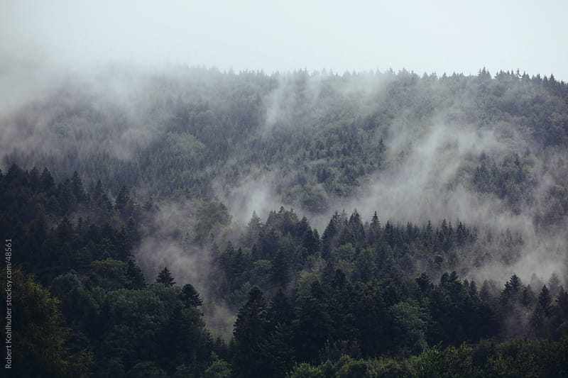 A forest with mist in autumn by Robert Kohlhuber for Stocksy United