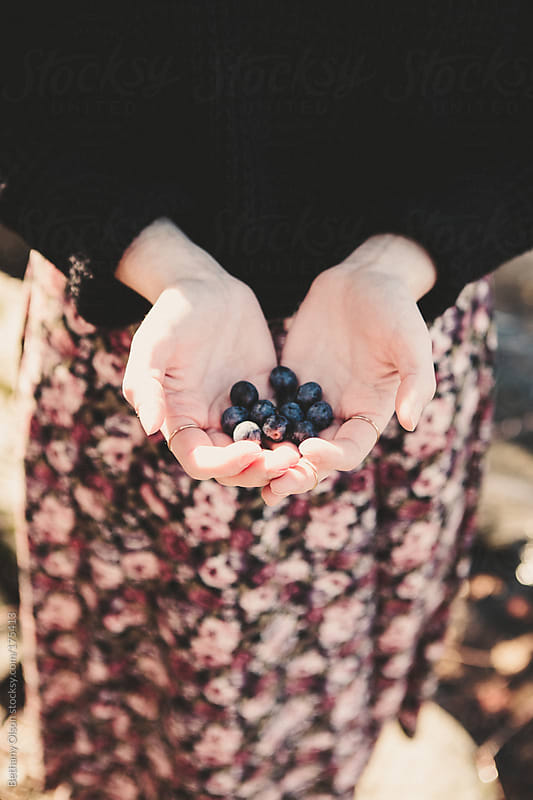 Hand full of Blueberries by Bethany Olson for Stocksy United