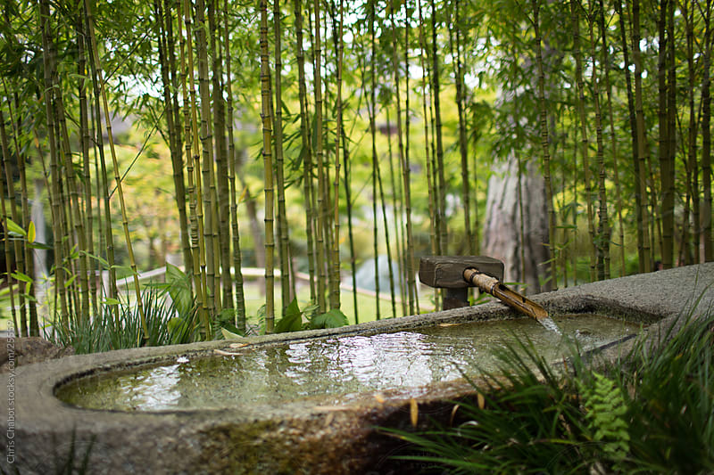 A pond in a zen garden  by Chris Chabot for Stocksy United