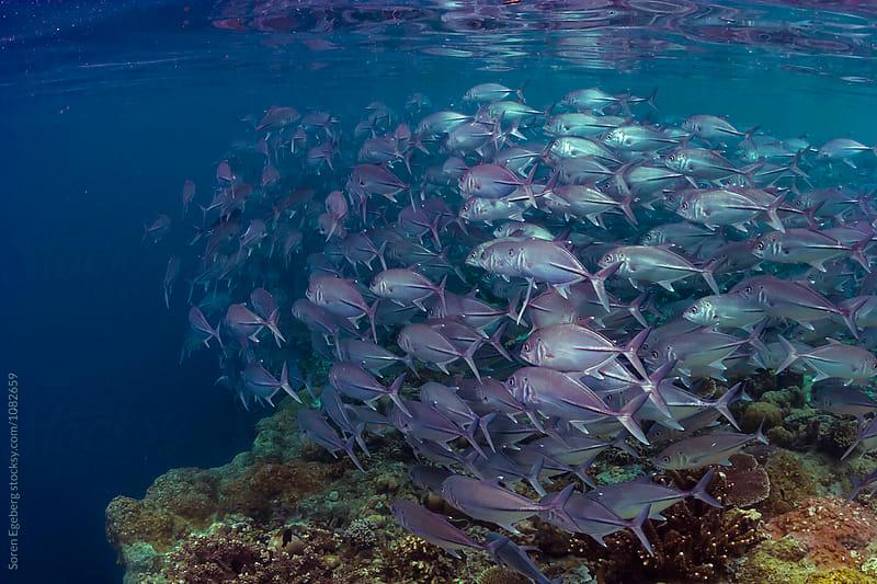 Tropical fish swimming underwater by Soren Egeberg for Stocksy United