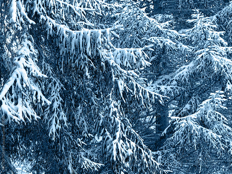 Winter Tree Background by VICTOR TORRES for Stocksy United