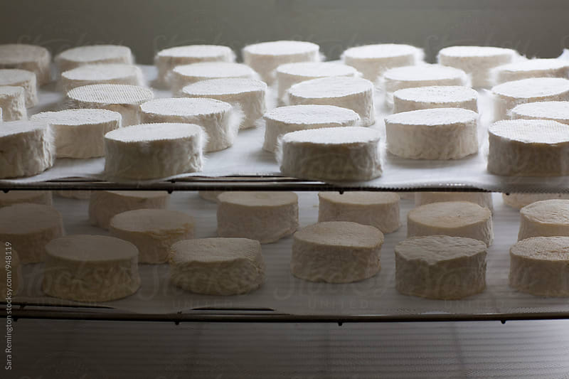 Organic Goat Cheese in Process by Sara Remington for Stocksy United