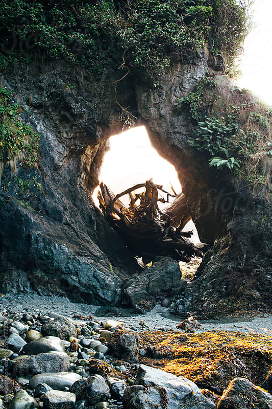 An Old Washed Up Tree Trunk Wedged In A Rock Arch Along The Seashore by Luke Mattson for Stocksy United
