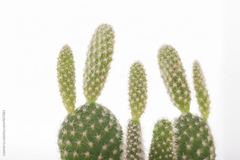 Still Life of Small Potted Cactus Plant with Bright White Background by Lawren Lu for Stocksy United