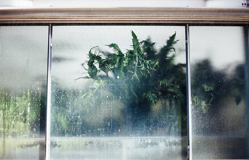 Plant against glass in greenhouse by Kara Riley for Stocksy United