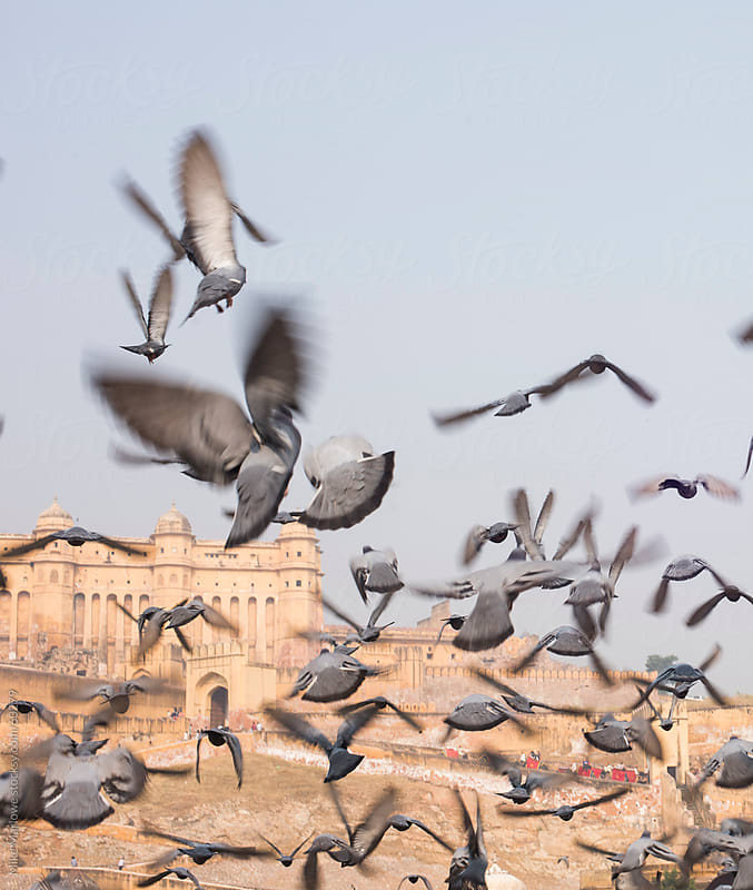 A flock of pigeons taking off. by Mike Marlowe for Stocksy United