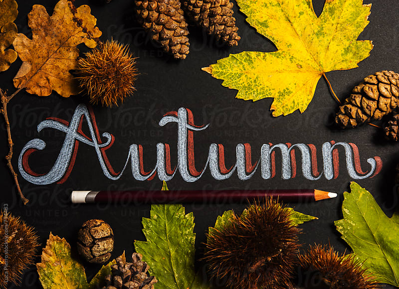 Autumn theme background with maple leaves by Luca Pierro for Stocksy United