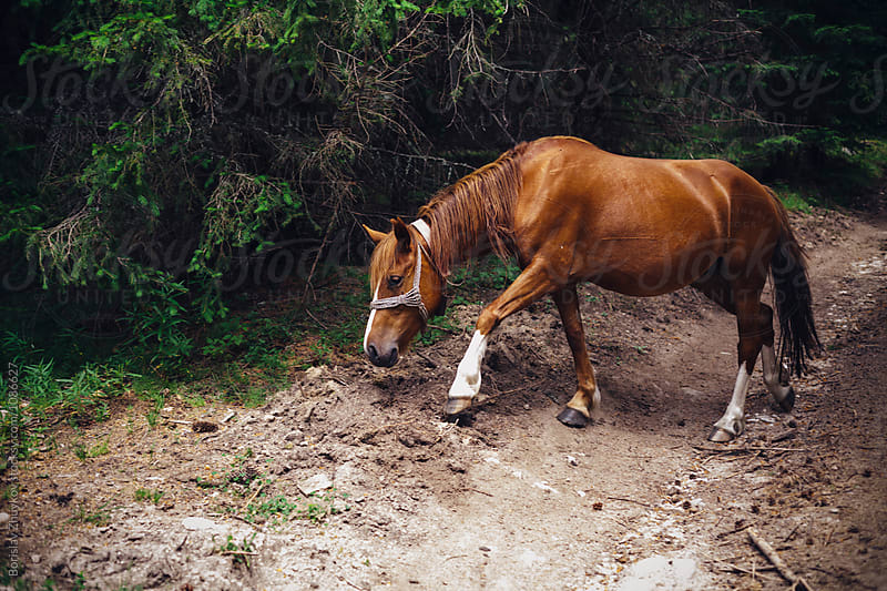 Wild horse in the forest by Borislav Zhuykov for Stocksy United