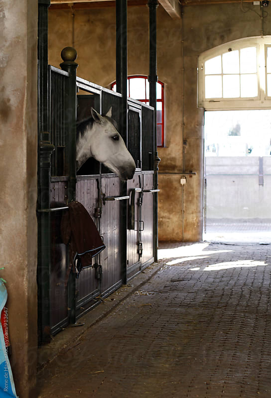 horse in stable by Rene de Haan for Stocksy United