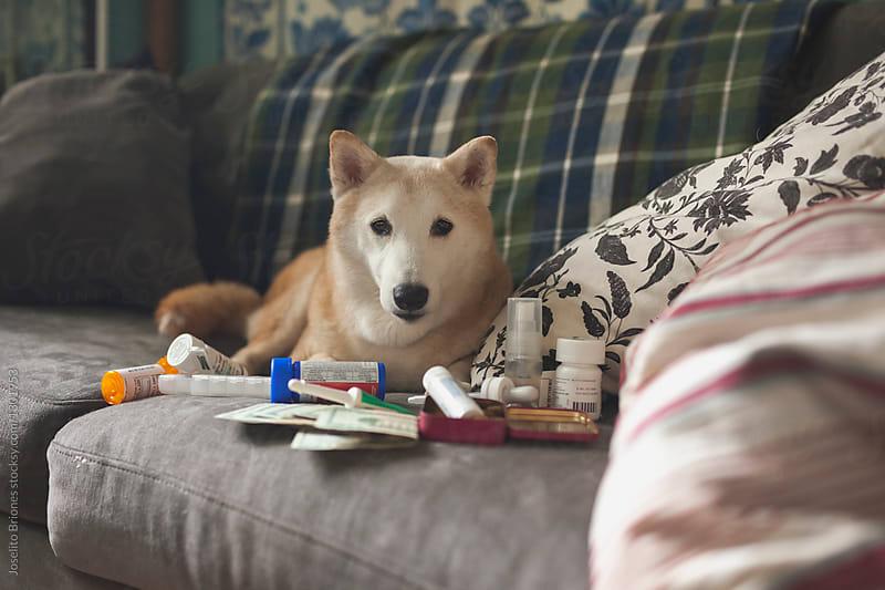 Senior Pet Medical Health Care Issues