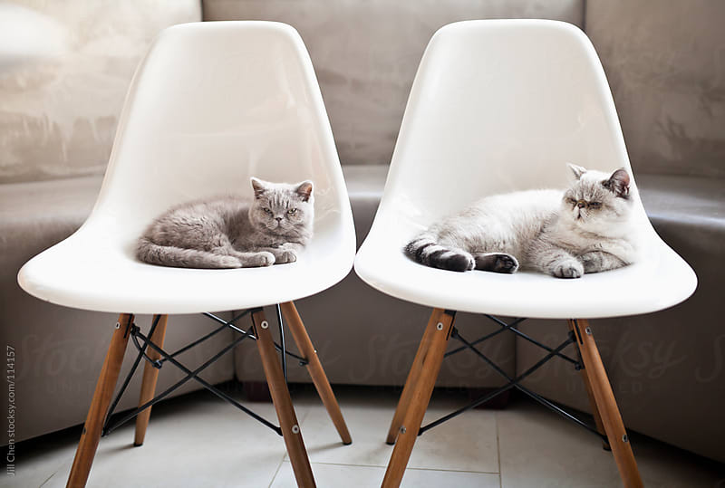 Lazy Cats by Jill Chen for Stocksy United