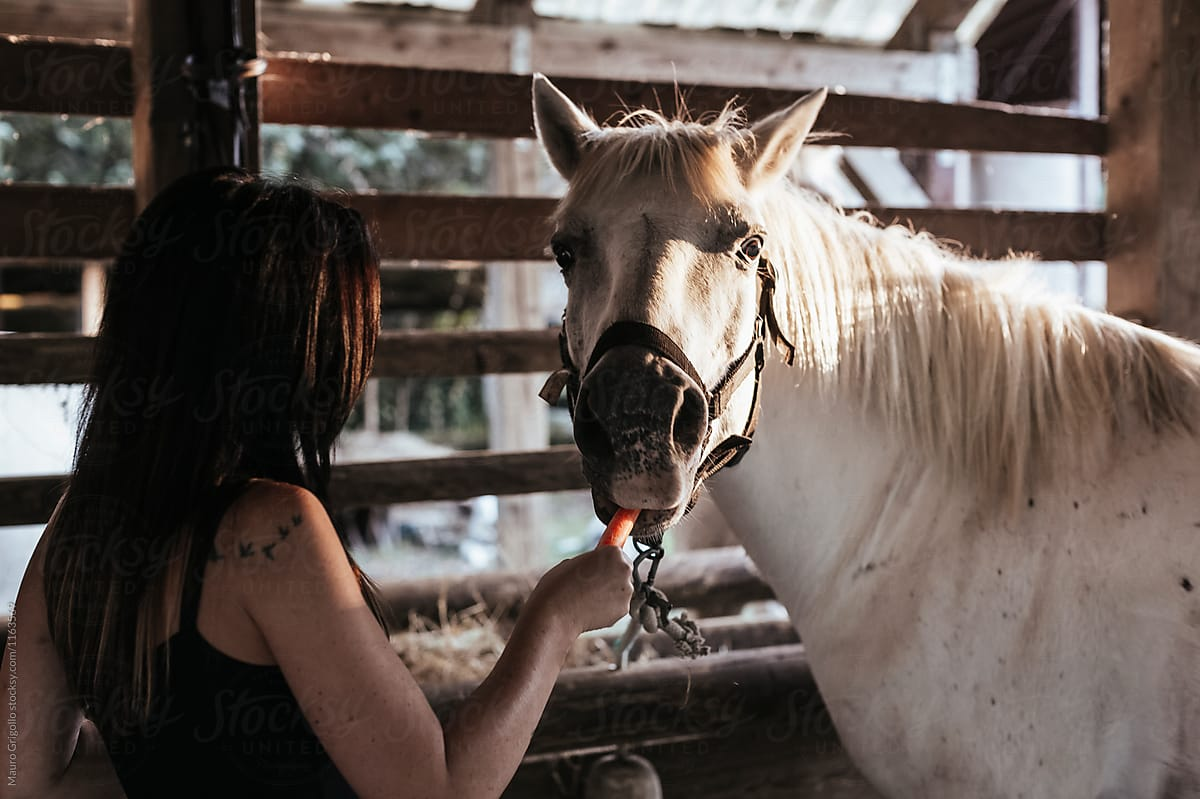 Woman Take Care Of Her White Horse By Mauro Grigollo Horse Stable Stocksy United