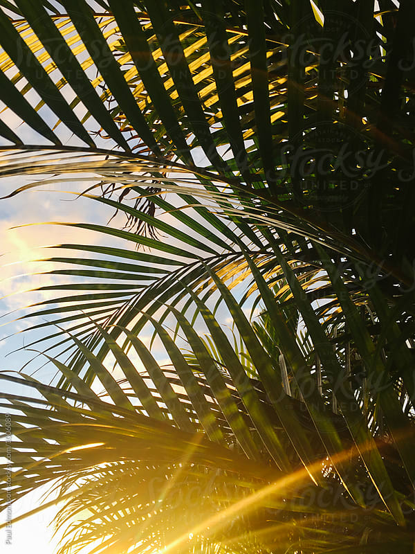 Palm leaves and sunbeams at dusk, Oahu, Hawaii by Paul Edmondson for Stocksy United