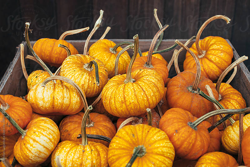 Wooden box full of small pumpkins with long stems by Carolyn Lagattuta for Stocksy United