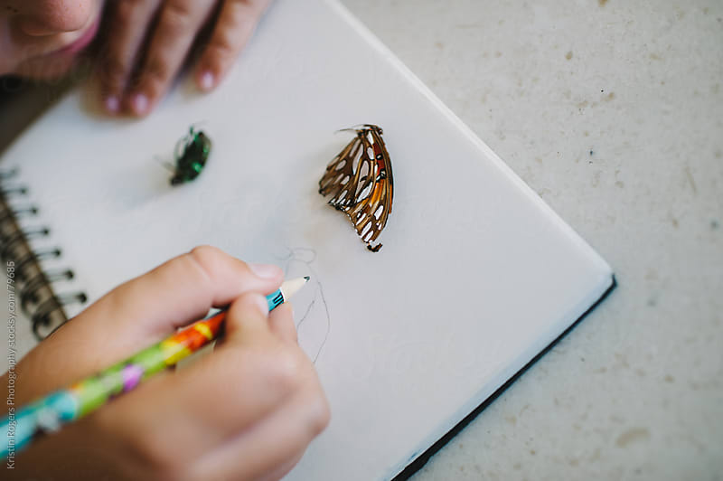 Child sketching a butterfly in his nature journal by Kristin Rogers Photography for Stocksy United