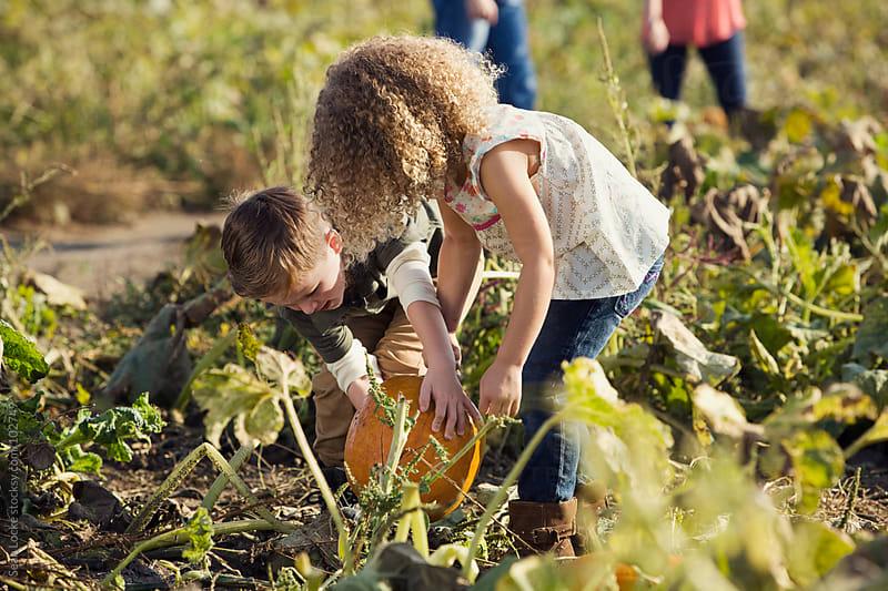 Pumpkins: Siblings Try To Find A Good Pumpkin In Field by Sean Locke for Stocksy United