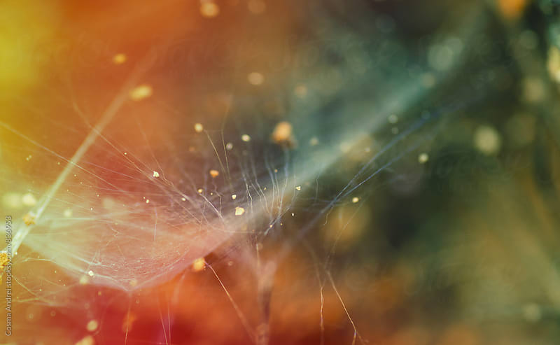 Abstract colors in nature with spider web by Cosma Andrei for Stocksy United