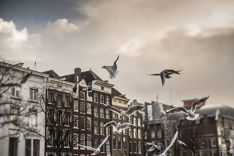 gulls hovering  the city searching for food. by Eva Plevier for Stocksy United