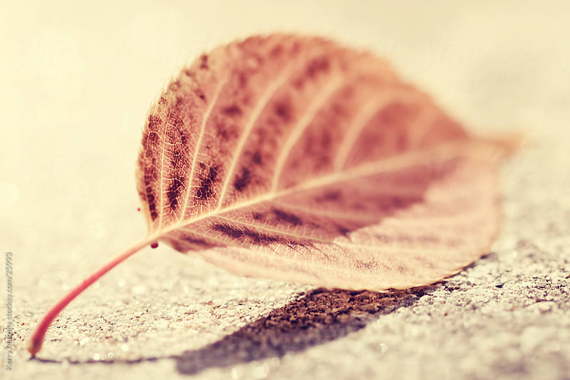 Macro of autumn leaf by Kerry Murphy for Stocksy United