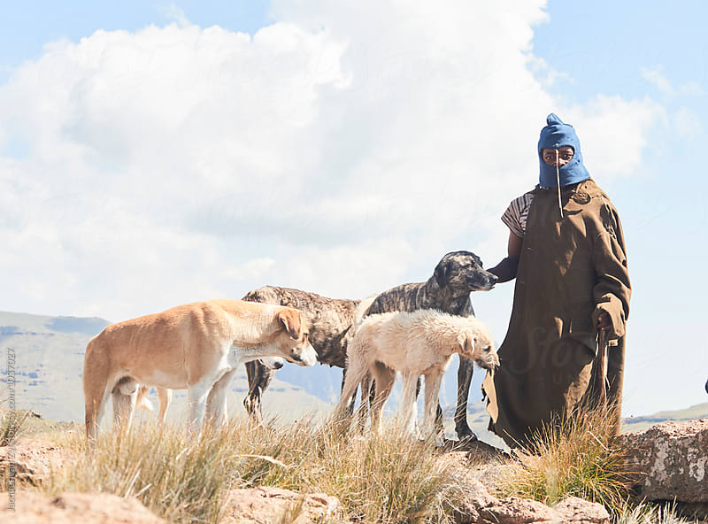 A Monsotho shepherd and his dogs. by Jacques van Zyl for Stocksy United